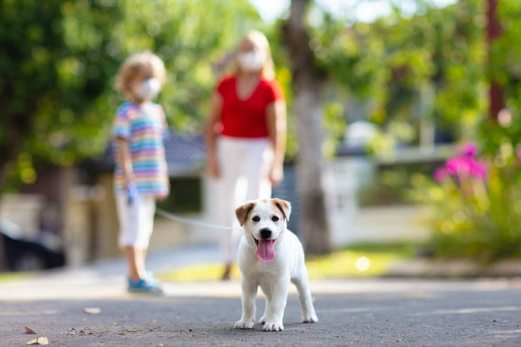 Des gens portant un masque marchent avec un chien