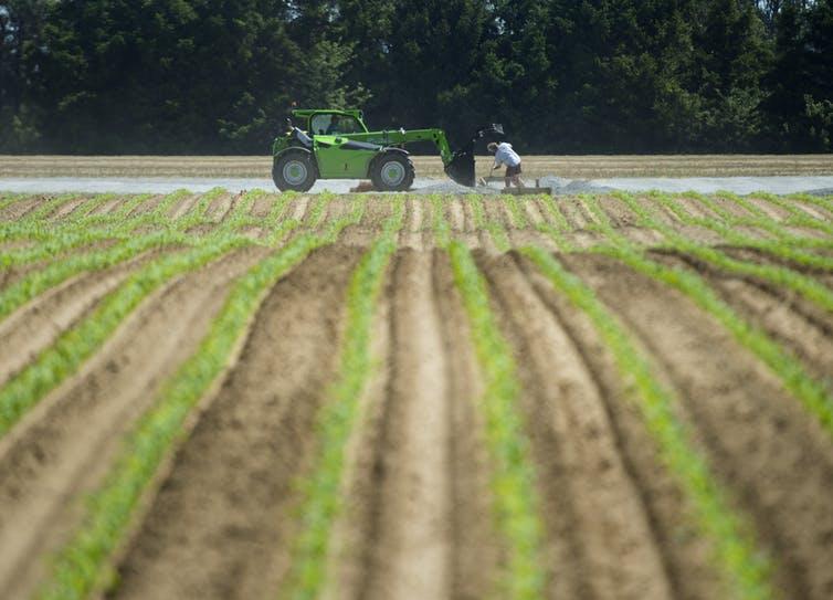 Un homme sur un tracteur dans un champ agricole
